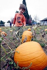 choosing a pumpkin    mg 2075
