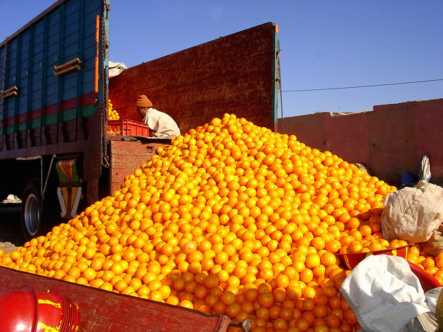 Oranges for the Guelmim market