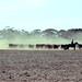 Giddyup - Horses - Dust - Cattle - David - Australia