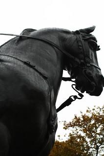 Image of Equestrian statue of Edward VII. sculpture toronto ontario canada rain