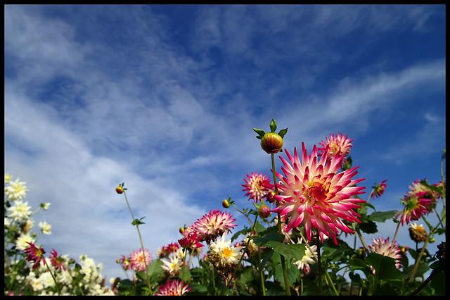 October Flowers Flickr Photo Sharing