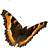 the Butterfly Gallery - only Butterflies: Moths in the Moth Gallery group icon