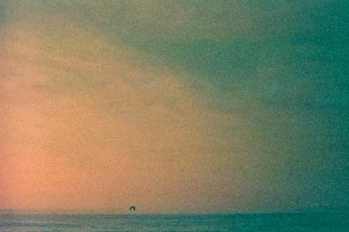 bird film lomoredscale beach grain canon rebelg