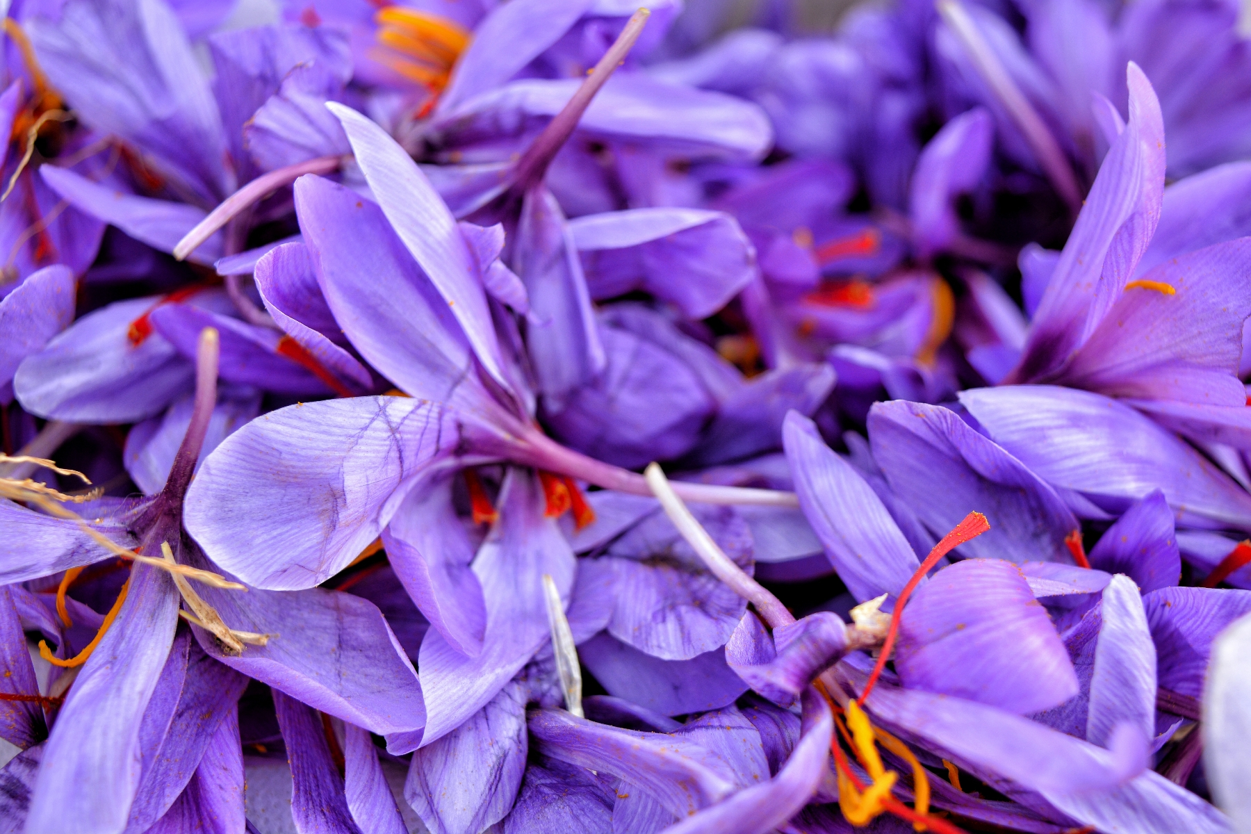 Saffron Edible Flowers to Flavour your Food & Improve your Health (gardeningflavours.com)