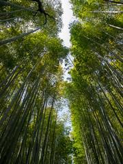 Sky through the Bamboo Grove - Kyoto