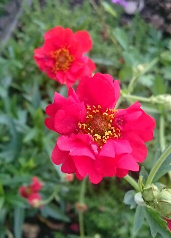 gardenphoto_1496076942752