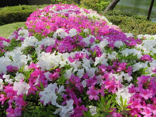 昭和記念公園 日本庭園 ツツジ