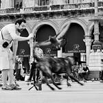 Le photographe du Duomo de Milano