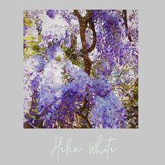 Helen White Artist