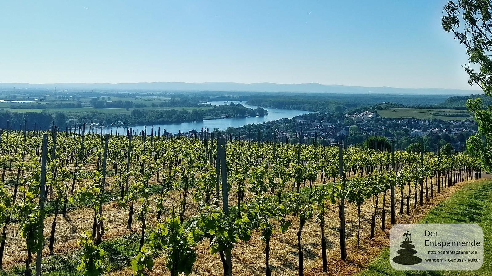 Blick von Niersteiner Wartturm auf Rhein und Niersten