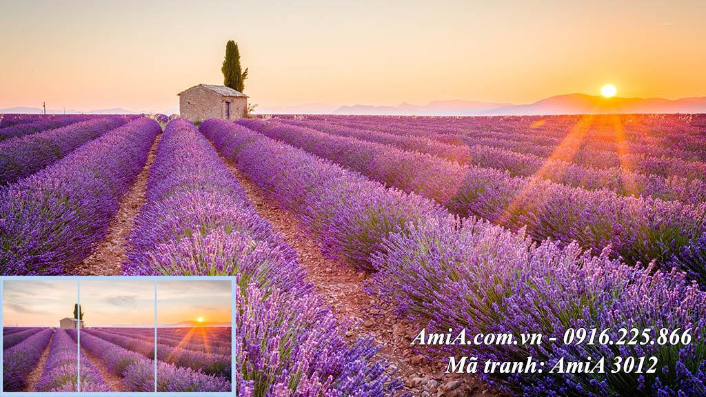 Tranh phong cảnh đẹp ánh nắng bình mình trên đồng hoa oải hương