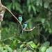 4I6A4609藍喉蜂虎H Blue-throated Bee-eater by 賞景者 Jeff Lin