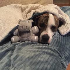 Jack Snuggles Hippo