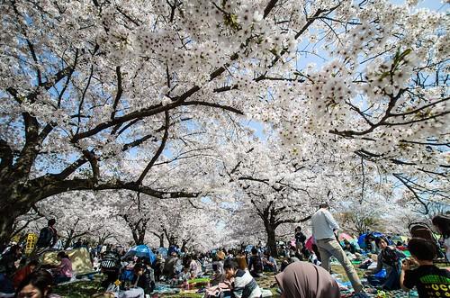 花見客で賑わう上の広場