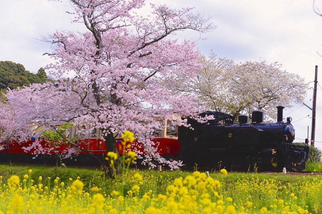 Ж/д линия Исуми в префектуре Тиба