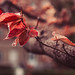 a new life by Smo_Q