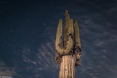 Long Exposure Saguaro Cactus