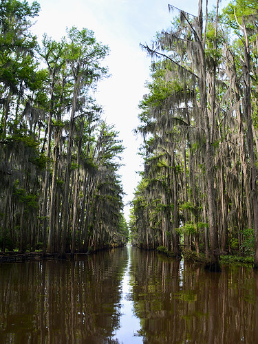 uncertain uncertaintx texas usa outdoor landscape landscapes caddolake lake water tree trees cypresstree reflection green spring moss tillandsiausneoides spanishmoss forest wood sky river
