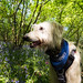 Teddy in the bluebells