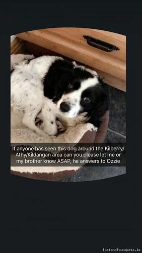Tue, Apr 24th, 2018 Lost Male Dog - Unnamed Road, Kildare