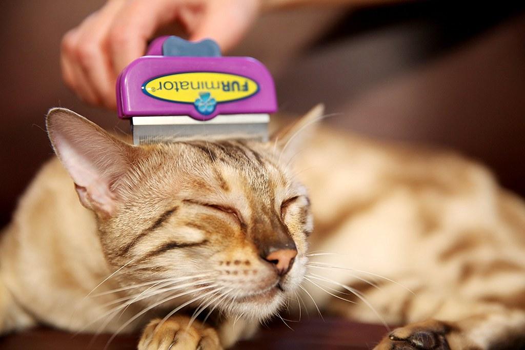 furminator y gato