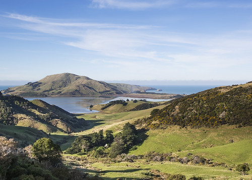 lisaridings fantommst southisland nz newzealand otago peninsula landscape waterscape country side dunedin countryside farm land hills portobello