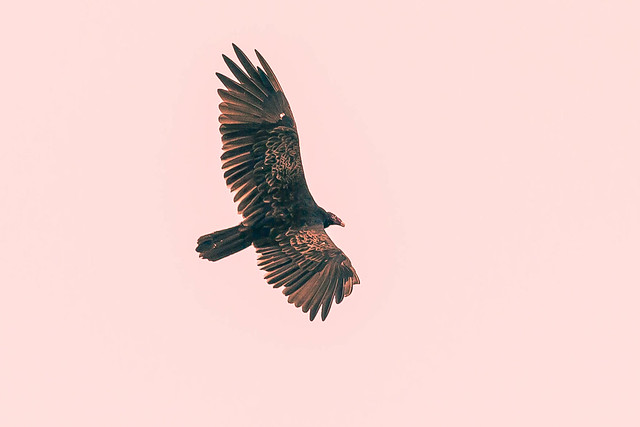 july 2017 lake katherine soaring above cal sag