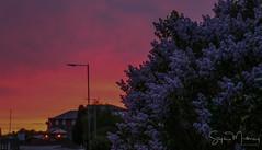 Lilac-Wine Sunset