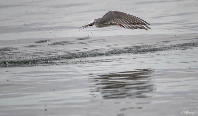 Tern missed