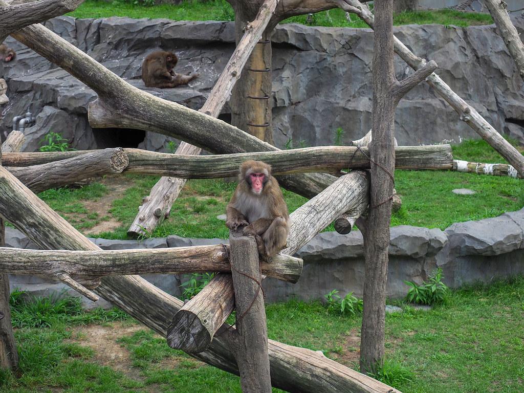 動物園サル/80mm相当