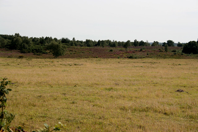 Snape Warren Nature reserve
