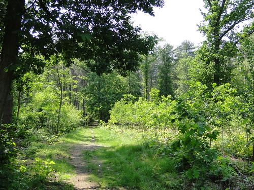 Sterschotsbos forest