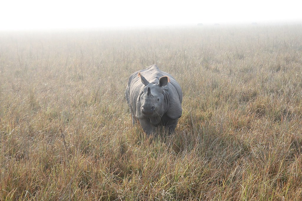 rhino-804414_1920