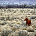 Wild Horse in New Mexico by Geek Dad Photography