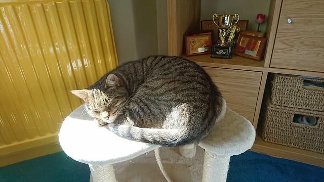 cat May 2018 (1)