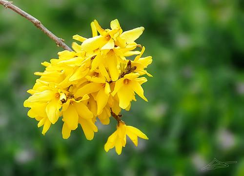 La primavera se abre paso