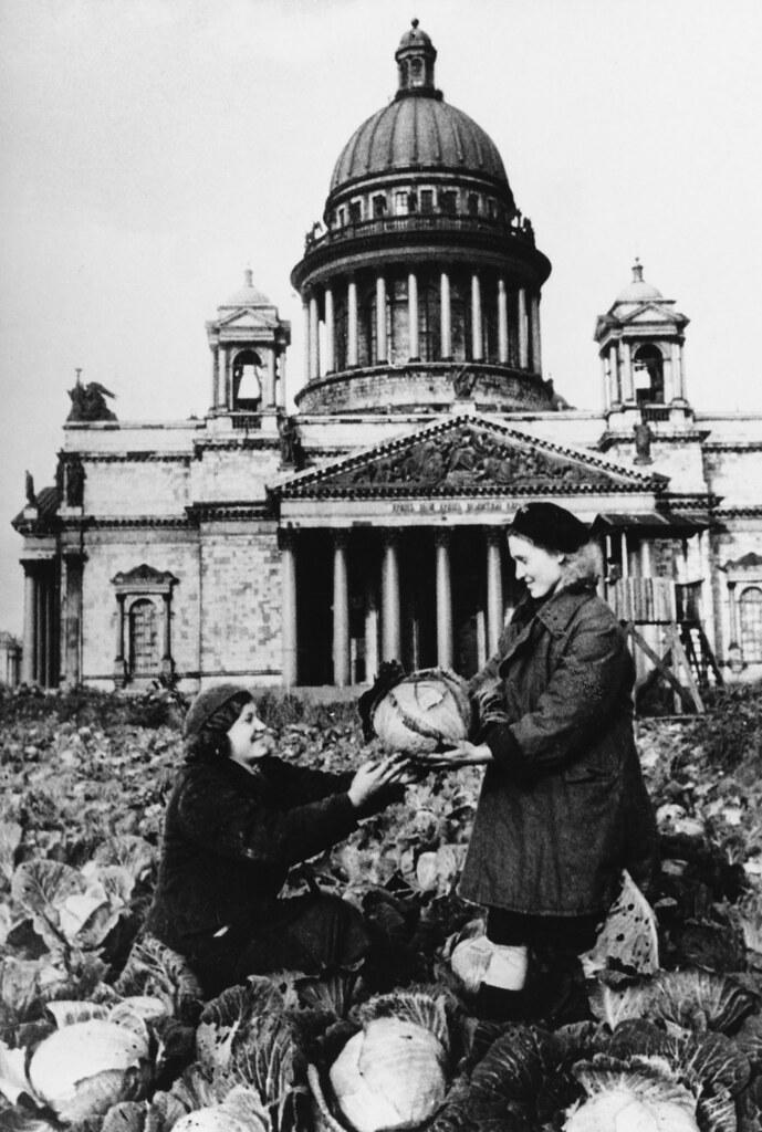 1942. Вместо роз — капуста