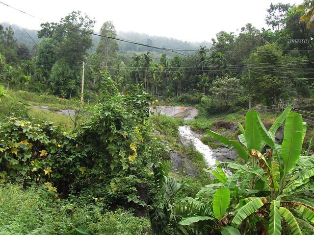 Natural Fall and Vegetation