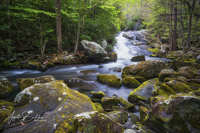Little River - Great Smoky Mountains