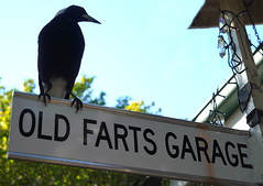Old Fart Magpie (5)