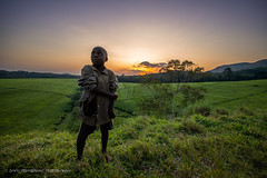 Kids on Ankole Tea Plantation, Sunset, Uganda