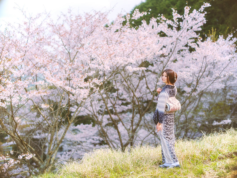 When the cherry blossoms are blooming