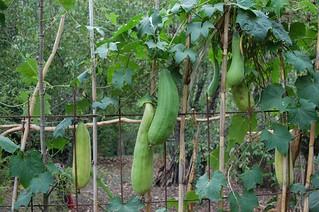 esponja-vegetal-cosecha-almacenamiento_1