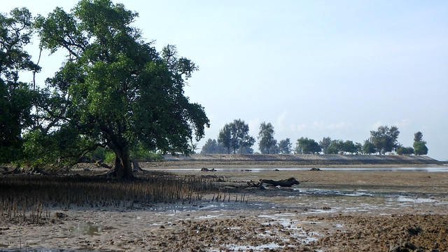 Natural mangroves next to Semakau landfill