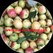 Rượu táo mèo - Món ngon nổi tiếng núi rừng Tây Bắc