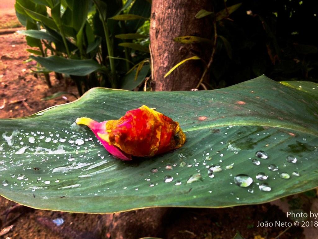 O encanto das flores em gotas, de João Neto Rodrigues, Olhar do leitor. Foto: José Neto