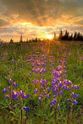 Wild Flowers Inspiration : ♥♥