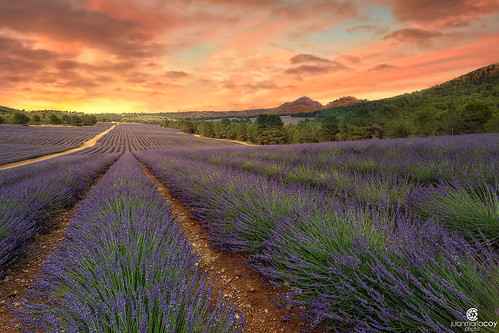 A slow dawn paints the colors of Lavanda - Liétor (Albacete, Spain)