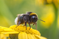 Bee Chilled