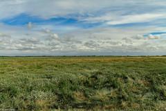 Baie de Somme (2)